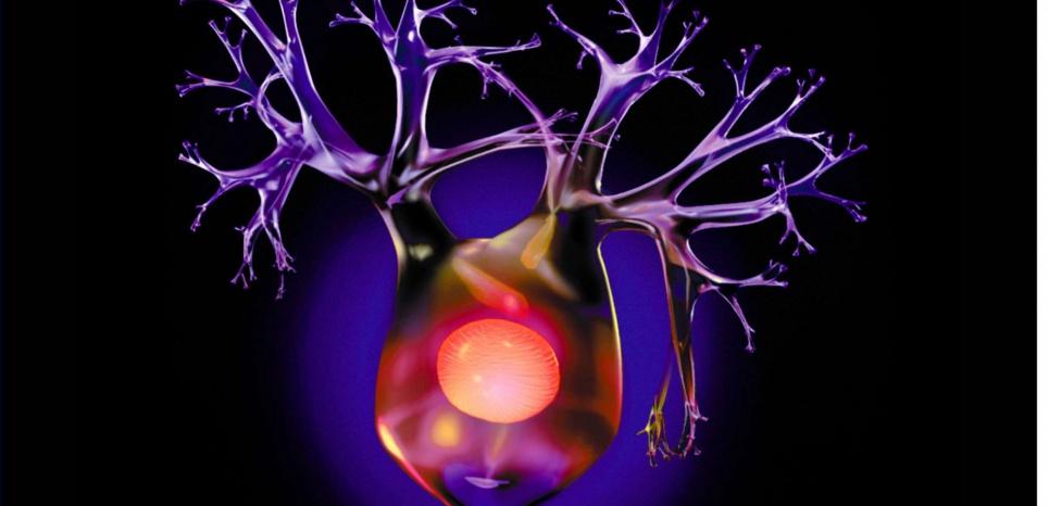 6 règles d'or pour que votre cerveau continue à fabriquer de nouveaux neurones