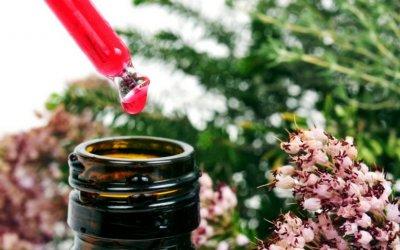 Fleurs de Bach : élixirs floraux aux vertus thérapeutiques