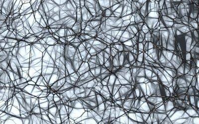 Comment fabriquer et garder de nouveaux neurones ?