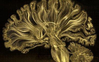 La magie et la complexité des neurones révélées dans une microgravure