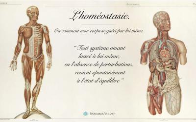 L'homéostasie : notre corps est notre premier médicament